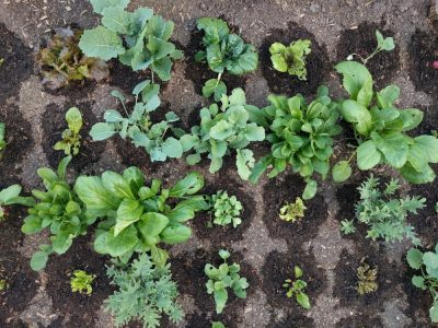 farmbot zelenina